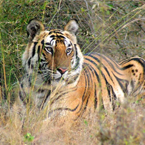Bandhavgarh: National Park with rich historical past