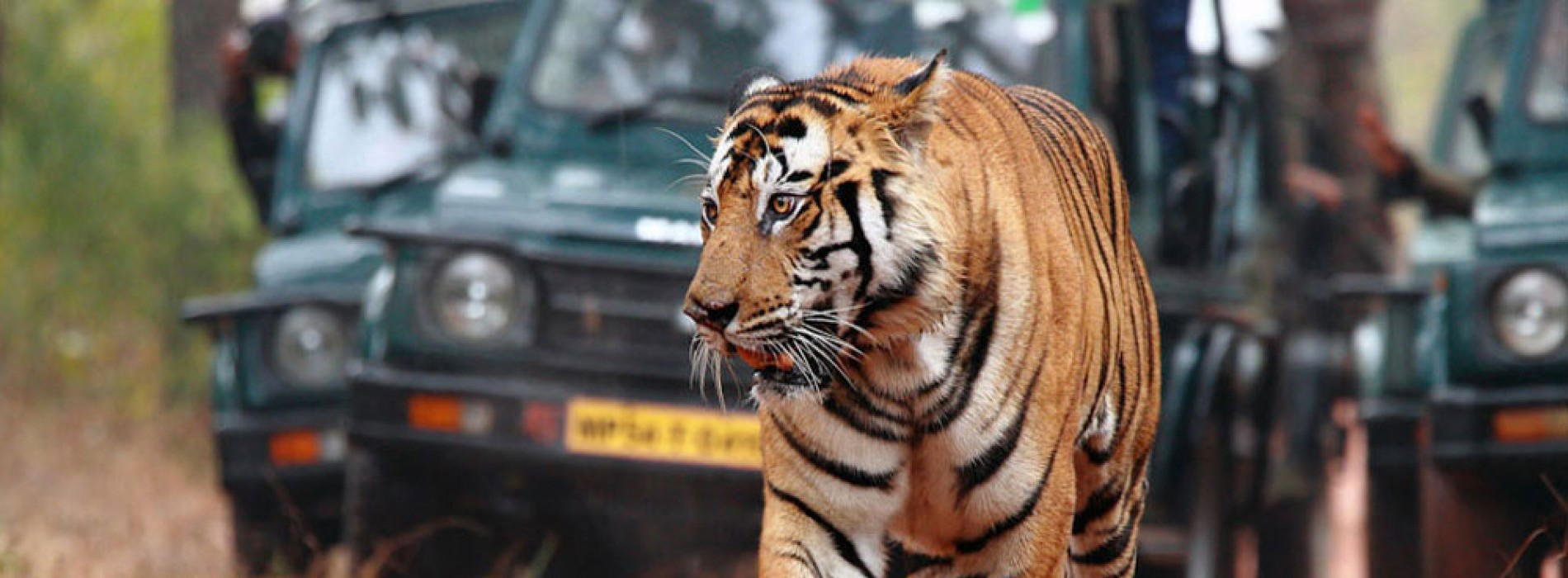 Ranthambore National Park: natural abode of the majestic tigers