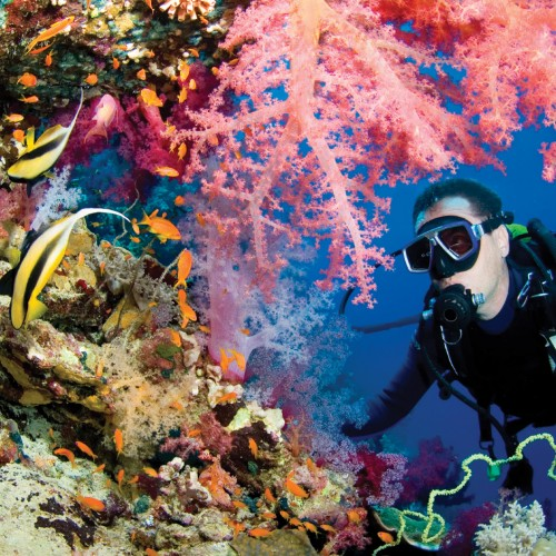 Famous Island Reefs and Diving Spots Across the World