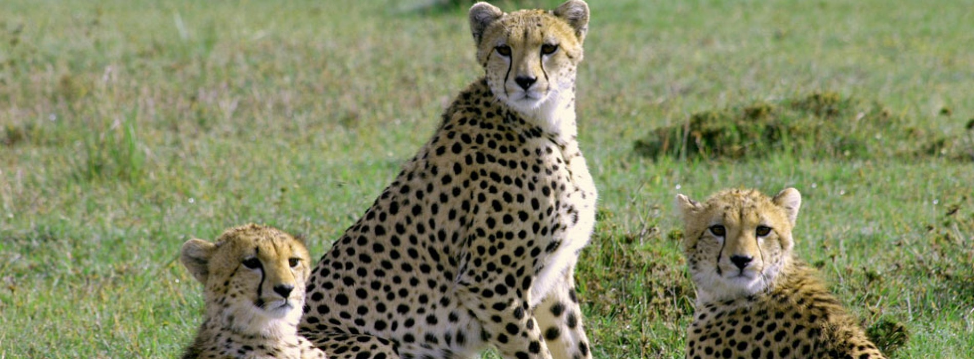 Experience the ultimate Luxury in a private game reserve in Kenya