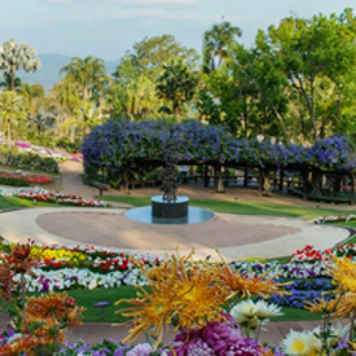Colors of Doi Tung returns to the mountains of Chiang Rai for the second year