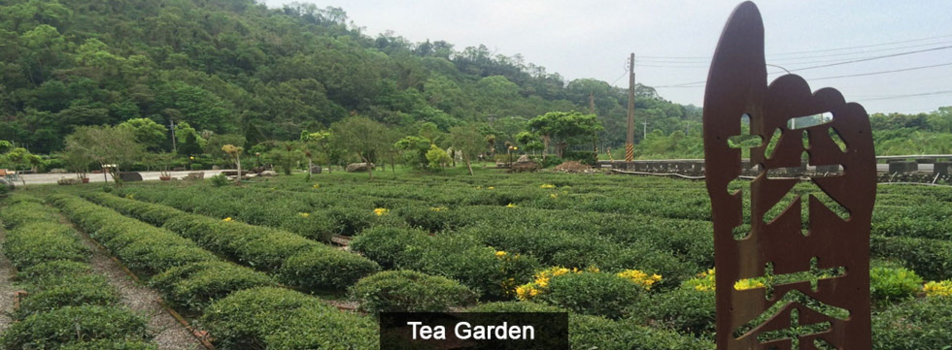 Brew a cup of aromatic tea in Taiwan