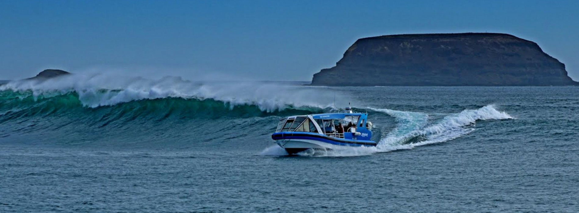 Top 8 reasons to visit Phillip Island