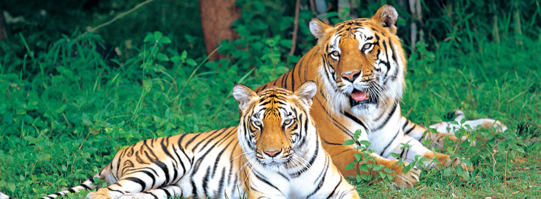 "2017 is the ""Year of the Wild"" for Karnataka Tourism"