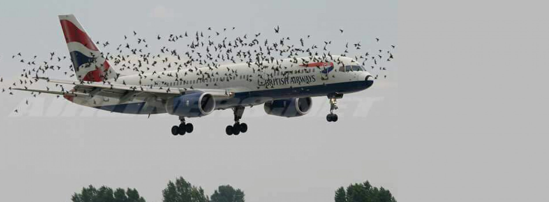 British Airways planes carrying Christians attacked by strange birds in air