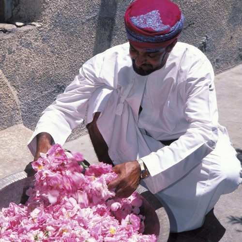 Visit Jabal Akhdar in Oman for a rose-inspired experience