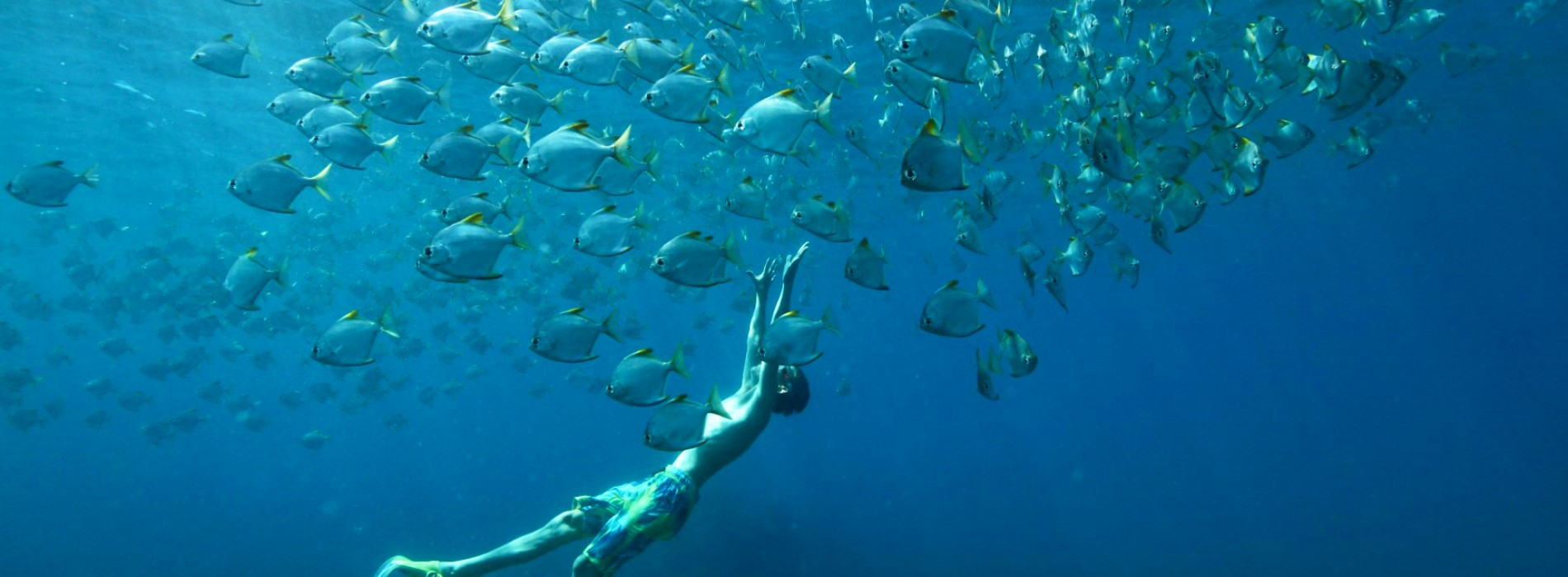 Discover a snorkelling haven with Cinnamon Nature Trails in Pigeon Island