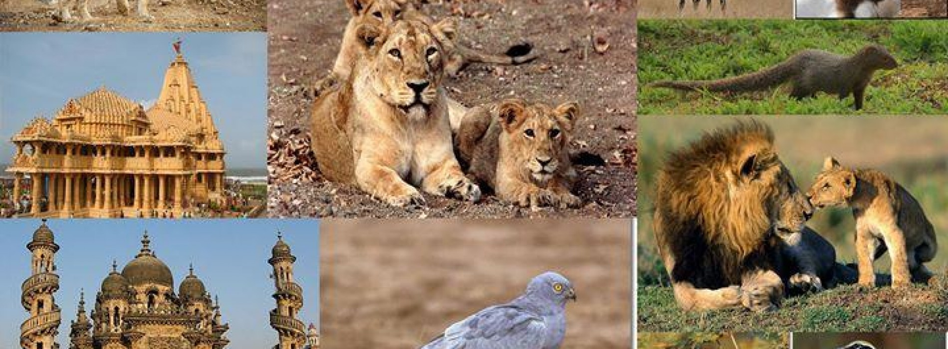 Gir National Park to remain closed for monsoon