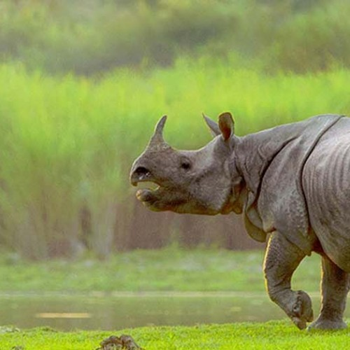 Kaziranga National Park in Assam not covered under the 'Adopt a Heritage' scheme: Tourism Minister