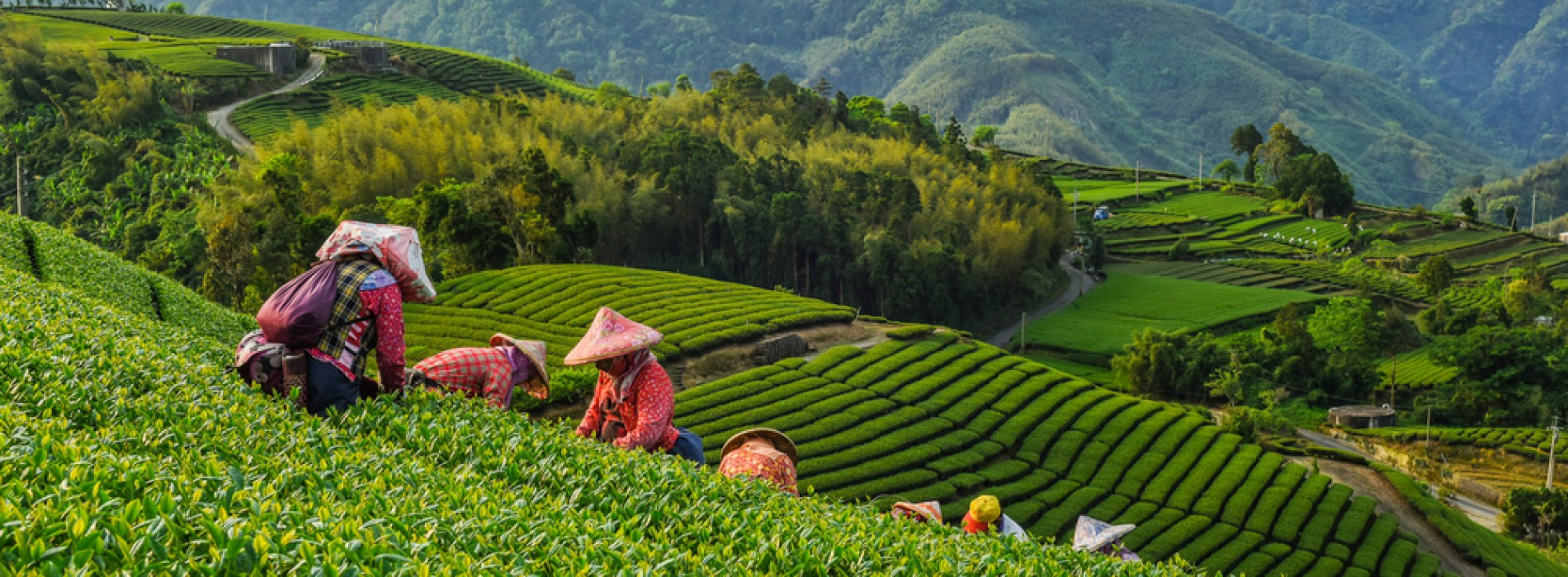 Holidays for Healing In Taiwan: Tea Trails and Celebrations